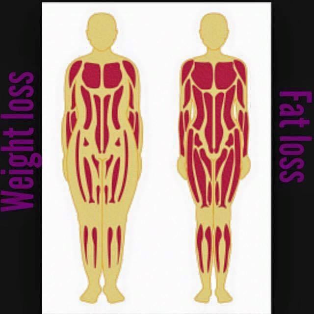 weight-loss-v-fat-loss